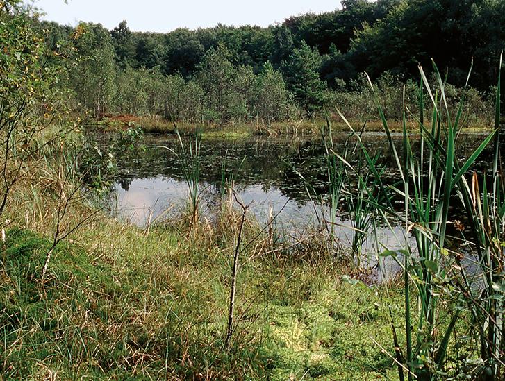 Våtmark på Kullaberg